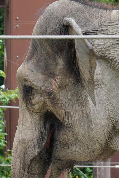 ゾウのアップ